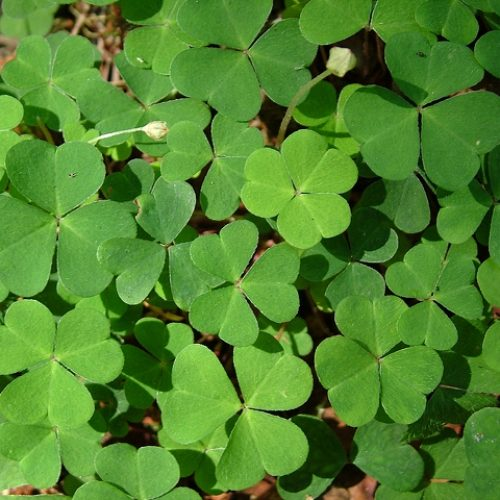 Camgirl St Paddy's Day Tips and Information